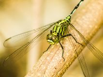 Dragonfly in nature. Stock Photos