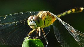 Dragonfly in nature stock video