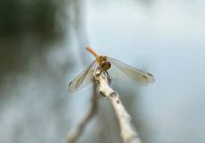 Dragonfly in nature Stock Photos