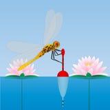 Dragonfly obsiadanie na pławiku lily wody Woda połów Zdjęcia Stock