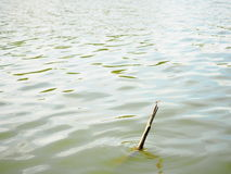 Dragonfly on old broken stick in the river Stock Photos