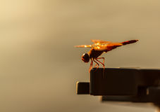 Dragonfly orange background, Silhouette. Dragonfly with blur beautiful nature background, outdoor stock photography