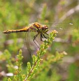 Dragonfly. Out enjoying the nature on a sunny day Stock Photo