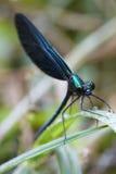 Dragonfly outdoor Stock Photos