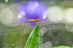 Dragonfly outdoor Stock Images