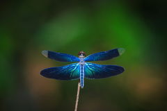 Dragonfly outdoor,beautiful dragonfly . Stock Photos