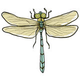 Dragonfly painting Royalty Free Stock Photo