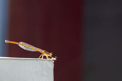 Dragonfly on paper box, with copy space on background Stock Photo