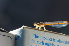Dragonfly on paper box, with copy space on background Stock Image