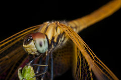 Dragonfly on a perch Stock Photos