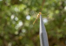 Dragon fly in macro on top of steel spike of fencing. Dragonfly perched on the top of the metal spike of a railing stock image