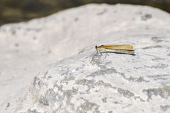 Dragonfly perching on a rock Royalty Free Stock Photos