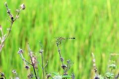 Dragonfly piękny na świeżej tło abstrakta zieleni zdjęcie royalty free