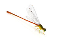 Dragonfly pin. Dragonfly on a white background Royalty Free Stock Image