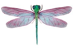 Dragonfly with pink wings on a white background vector illustration