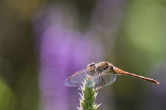 Dragonfly on a plant stock photography