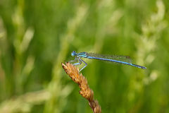 Dragonfly on a plant Royalty Free Stock Photos