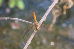 Dragonfly on plant Stock Photos