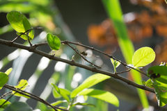 Dragonfly and Plant are Need Each Other Royalty Free Stock Image
