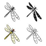 A dragonfly, a predatory insect.Dragonfly flying invertebrate insect single icon in cartoon style vector symbol stock Royalty Free Stock Photos