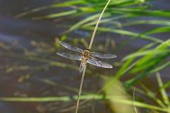 Dragonfly preflight procedures royalty free stock photo