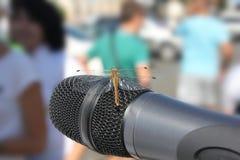 Dragonfly przy mikrofonem Obraz Royalty Free