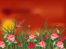 Dragonfly on red poppy field Royalty Free Stock Photography