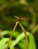 A dragonfly Stock Photos