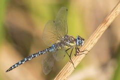 A dragonfly on Southampton Common royalty free stock photography
