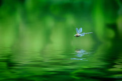 Dragonfly Reflection Royalty Free Stock Image
