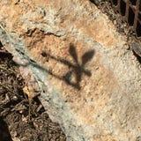Dragonfly Reflection royalty free stock photo