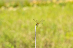 A dragonfly Stock Photos