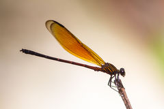 Dragonfly resting on a branch in forest stock photos