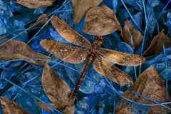 Dragonfly resting place Royalty Free Stock Image