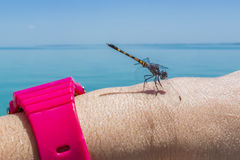 Dragonfly resting on a woman`s arm royalty free stock photography