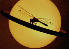 Dragonfly on a ring of Saturn. Royalty Free Stock Photos