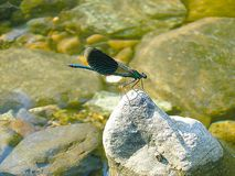 Dragonfly on river stock photos