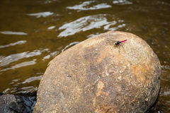 Dragonfly on rock Royalty Free Stock Photography