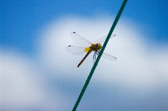 Dragonfly on rope. summer day. Stock Image