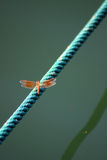 Dragonfly On Rope Royalty Free Stock Photo