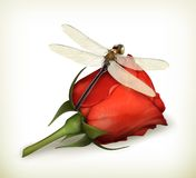 Dragonfly and rose Royalty Free Stock Images
