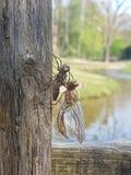 Dragonfly ` s matować riitual obraz royalty free