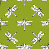 Dragonfly seamless pattern vector hand drawn illustration Stock Photos