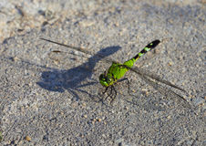 Dragonfly shadow Royalty Free Stock Photo