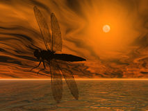 Dragonfly Silhouette Royalty Free Stock Images