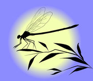 Dragonfly silhouette Stock Images