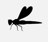 Dragonfly Silhouette Stock Photography