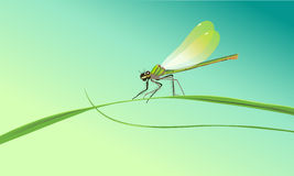 Dragonfly sitting on a blade. Of grass against a blue sky vector illustration