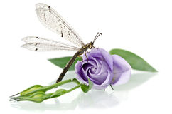 Dragonfly sitting on a flower Stock Photos