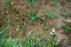 A dragonfly sitting on a flower. A dragonfly sitting on a grass leaf was photographed close stock photos